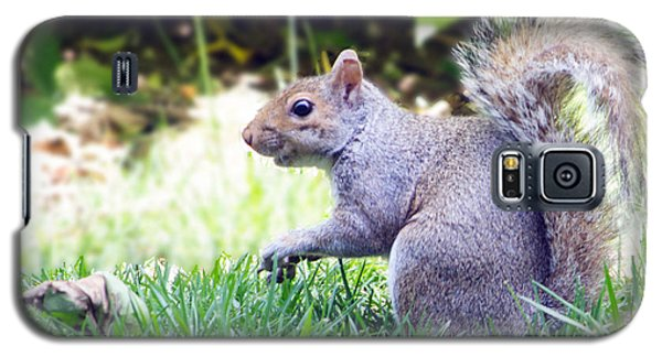 Grey Squirrel Galaxy S5 Case