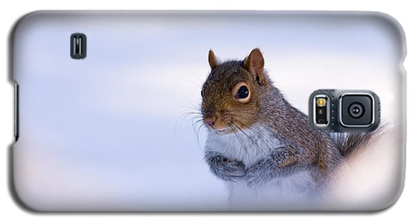 Grey Squirrel In Snow Galaxy S5 Case