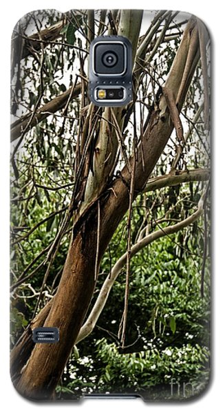 Gum Tree In Grunge Galaxy S5 Case