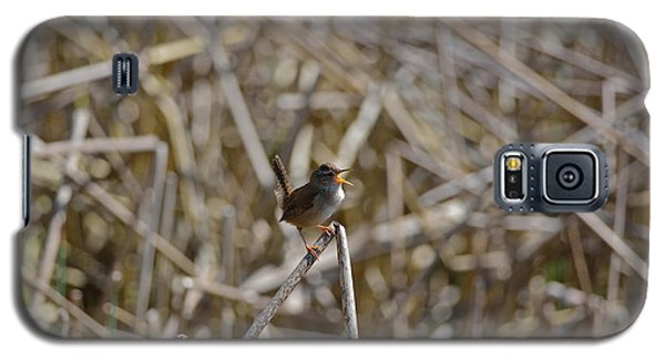 Galaxy S5 Case featuring the photograph Here I Am - Marsh Wren by Kathy King