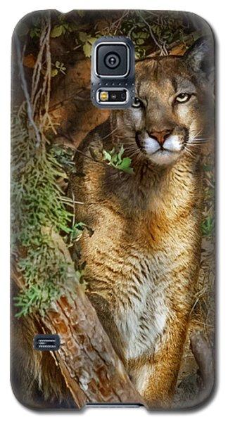 Hiding Galaxy S5 Case