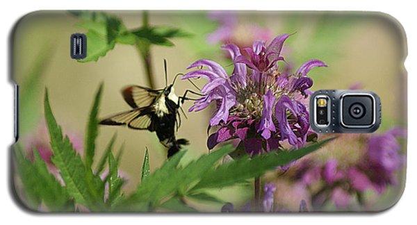 Hummingbird Moth Galaxy S5 Case by Rick Friedle