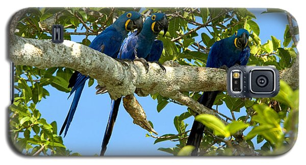 Hyacinth Macaws, Brazil Galaxy S5 Case by Gregory G. Dimijian, M.D.
