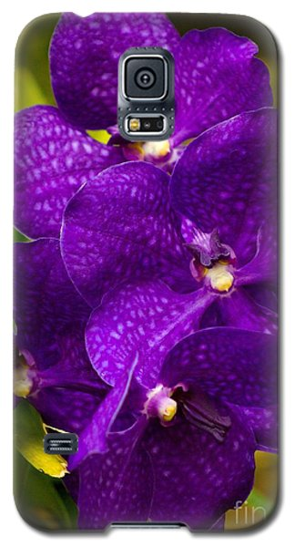 Play On Purple Galaxy S5 Case by Laurinda Bowling