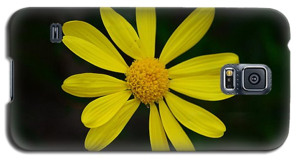 Galaxy S5 Case featuring the photograph Isolated Daisy by Debra Martz
