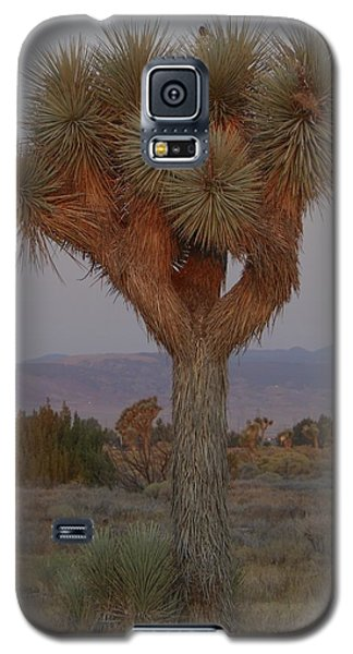 Joshua Tree And Moon Setting Galaxy S5 Case