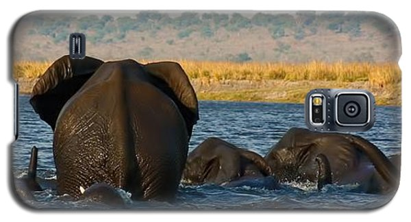 Galaxy S5 Case featuring the photograph Kalahari Elephants Crossing Chobe River by Amanda Stadther