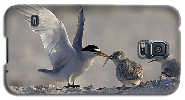 Least Tern Feeding It's Young Galaxy S5 Case