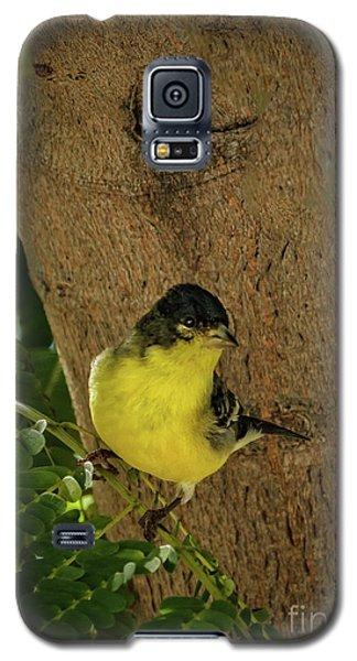 Sangre De Cristo Galaxy S5 Case - Lesser Goldfinch by Robert Bales