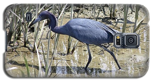 Galaxy S5 Case featuring the photograph Little Blue Heron by Jeanne Kay Juhos