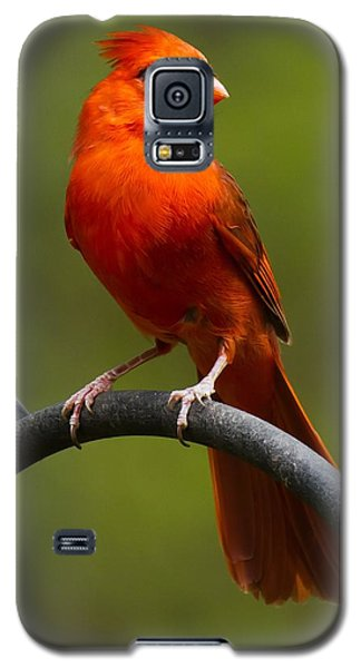 Male Cardinal Galaxy S5 Case by Robert L Jackson
