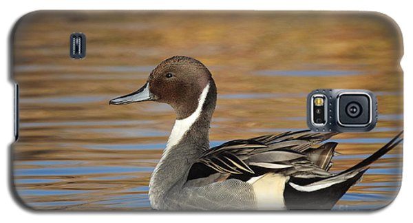 Male Pintail Galaxy S5 Case