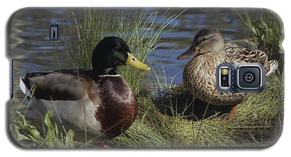 Mallard Duck Pair Galaxy S5 Case