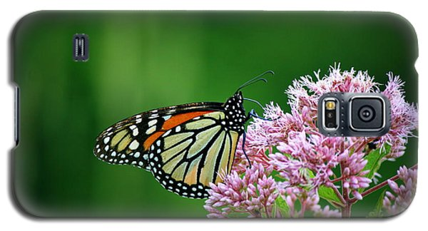 Monarch In Light  Galaxy S5 Case