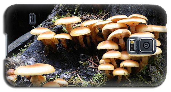 Galaxy S5 Case featuring the photograph Mushrooms On A Stump by Chalet Roome-Rigdon