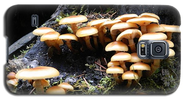 Mushrooms On A Stump Galaxy S5 Case by Chalet Roome-Rigdon