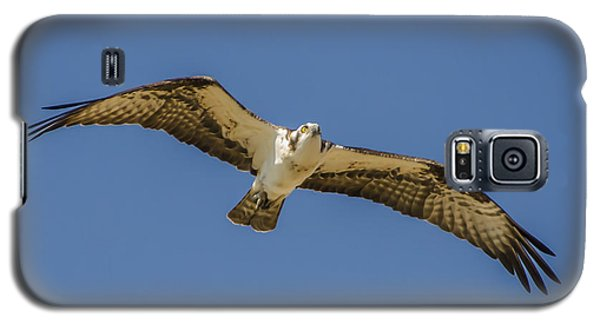 Osprey In Flight Spreading His Wings Galaxy S5 Case by Dale Powell