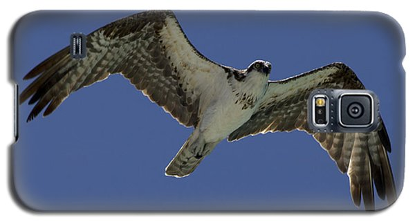 Galaxy S5 Case featuring the photograph Osprey In Flight Photo by Meg Rousher