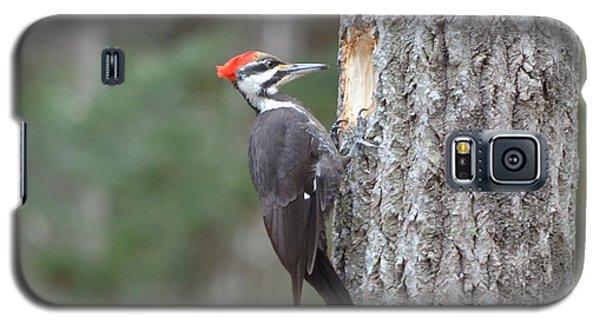 Pileated Woodpecker Galaxy S5 Case