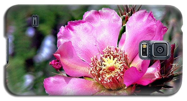 Pink Cactus Flower Galaxy S5 Case