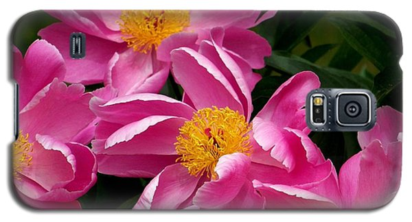 Pink Petals Galaxy S5 Case by Eunice Miller