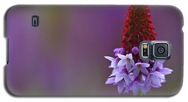 Galaxy S5 Case featuring the photograph Primula Vialii  by Zoe Ferrie