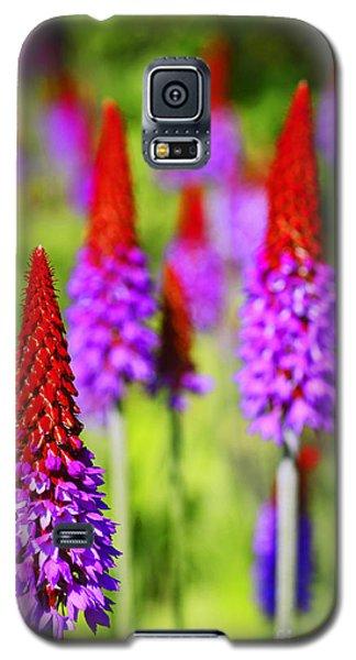 Primula Vialli Galaxy S5 Case by Craig B