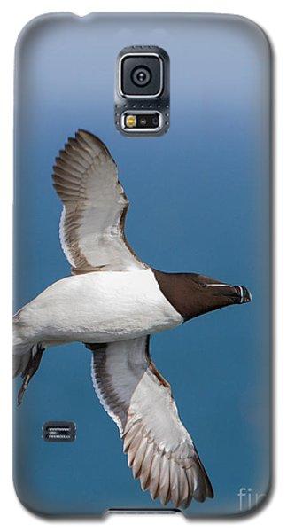 Razorbill Alca Torda  Galaxy S5 Case by Gabor Pozsgai