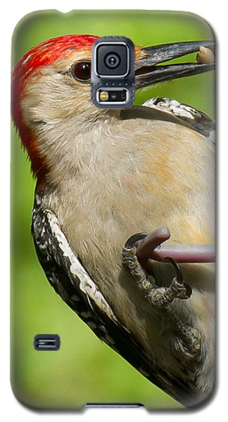 Red Bellied Woodpecker Galaxy S5 Case by Robert L Jackson