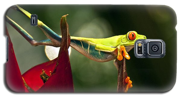 Galaxy S5 Case featuring the photograph Red Eyed Tree Frog 1 by Jialin Nie Cox WorldViews
