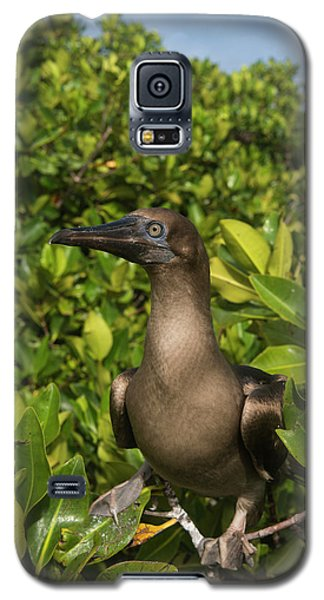 Boobies Galaxy S5 Case - Red-footed Booby (sula Sula Websteri by Pete Oxford