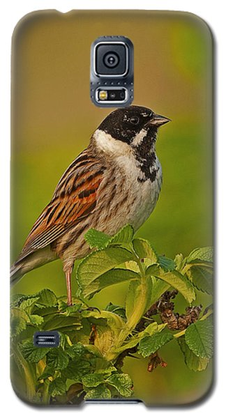 Reed Bunting Galaxy S5 Case by Paul Scoullar