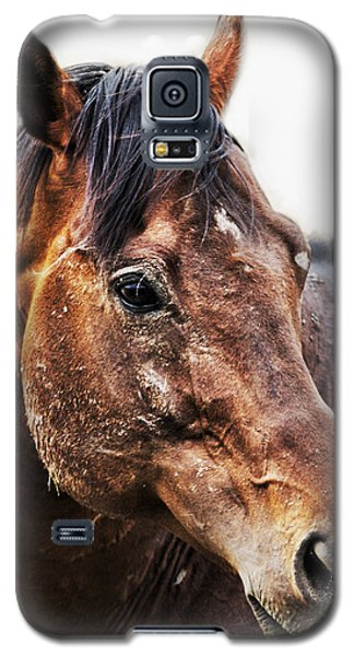 Resilience Galaxy S5 Case by Belinda Greb