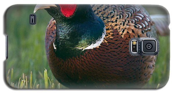 Ring-necked Pheasant Galaxy S5 Case