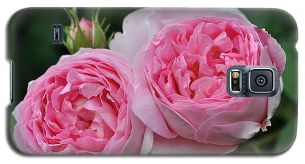 Galaxy S5 Case featuring the photograph Rose Constance Spry by Sabine Edrissi