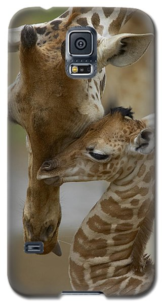 Rothschild Giraffe And Calf Galaxy S5 Case