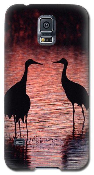 Sandhill Cranes Galaxy S5 Case