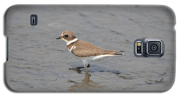 Semipalmated Plover Galaxy S5 Case by James Petersen