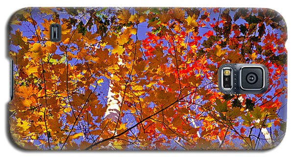 Galaxy S5 Case featuring the photograph Shades Of Fall by Dennis Bucklin