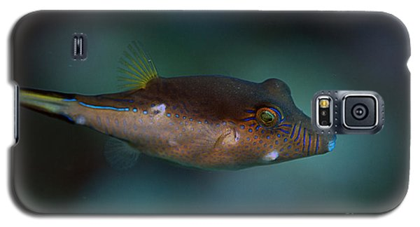Sharpnose Puffer Galaxy S5 Case