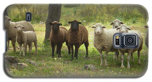 Sheep In Extremadura Galaxy S5 Case