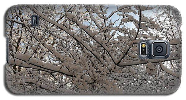 Galaxy S5 Case featuring the photograph Snow Covered Tree And Sun by Winifred Butler