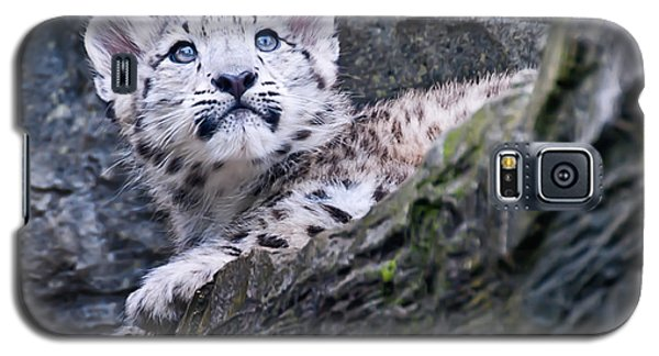 Galaxy S5 Case featuring the photograph Snow Leopard Cub by Chris Boulton