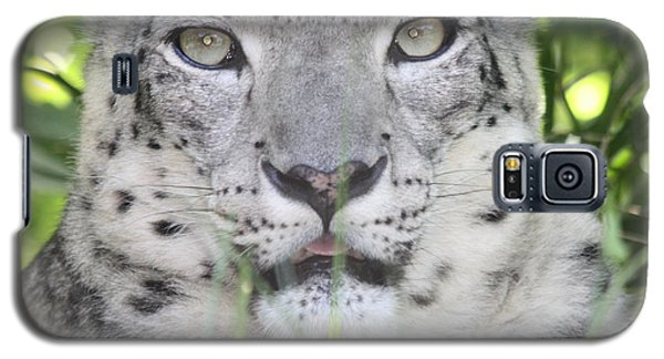 Snow Leopard Galaxy S5 Case by John Telfer