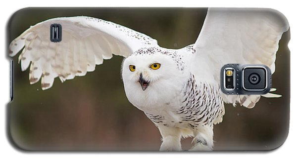 Snowy Owl Galaxy S5 Case by Les Palenik
