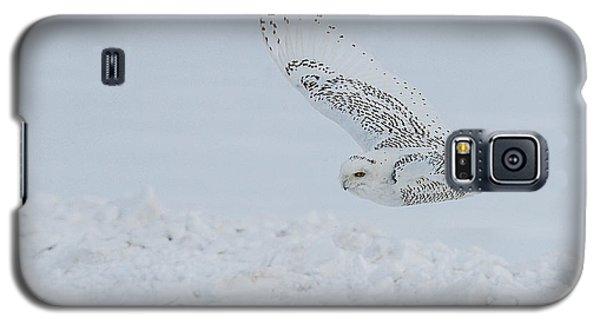 Snowy Owl #2/3 Galaxy S5 Case by Patti Deters