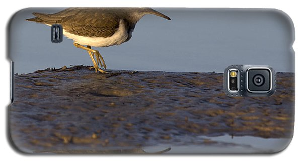 Spotted Sandpiper Reflection Galaxy S5 Case