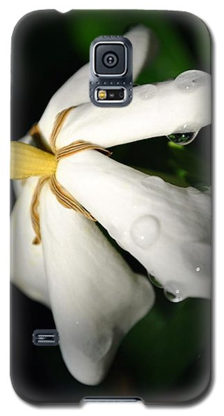 Galaxy S5 Case featuring the photograph Sun Kissed Gardenia by Kelly Nowak