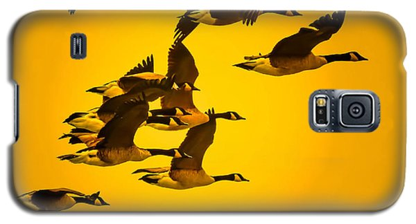 Galaxy S5 Case featuring the photograph Sunset Geese by Brian Stevens