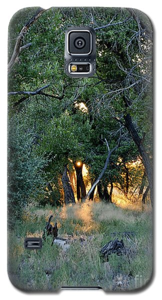 The Bosque Galaxy S5 Case by Gina Savage